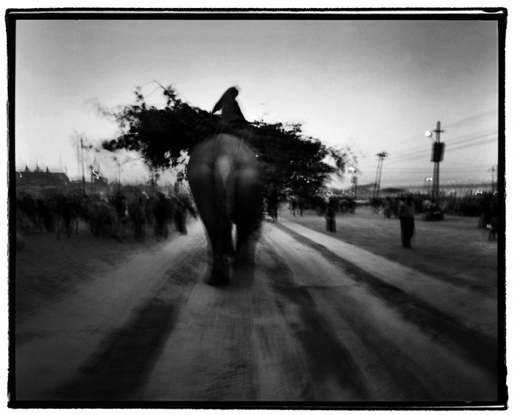 """""""che il passo lento dell'elefante ti porti lontano"""""""